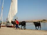 Leben am Nil