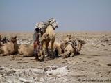 beladenes Kamel