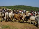 Viehmarkt