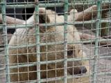 69 Vank Zoo