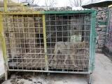 70 Vank Zoo