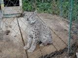 71 Vank Zoo