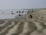 Am Strand in den Sundarbans
