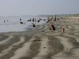 Am Strand in den Sundarbans