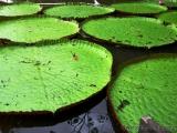 Amazonasdelta