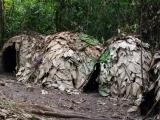15 - verlassenes Mbuti-Pygmaeen-Dorf