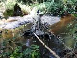 17 - Bruecke im Dschungel
