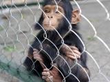 203 - Zoo in Kinshasa