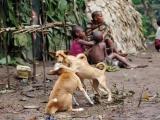 30 - Im Mbuti-Pygmaeen-Dorf