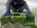 50 - Zoo Kisangani