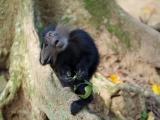 51 - Zoo Kisangani