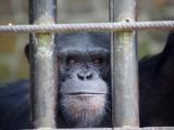 52 - Zoo Kisangani