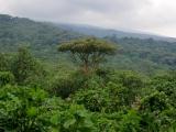 18 - Auf dem Weg zu den Berggorillas