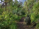 36 - Aufstieg zum Nyiragongo