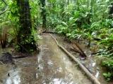 Methangaspfütze im Cuyabeno Reservat