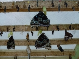 Mindo Schmetterlingshaus