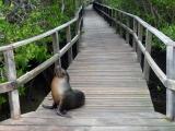 Galapagos Insel Isabela