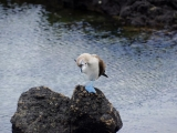 Galapagos San Cristobal