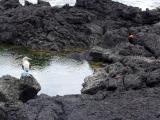 Galapagos Insel San Cristobal