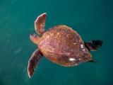 Galapagos Schnorcheln am Kicker Rock