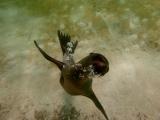 Galapagos Schnorcheln bei Lobo Island