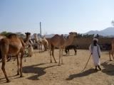 Keren - Kamelmarkt