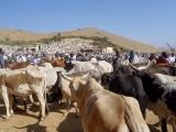 Keren - Rindermarkt