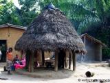 Herstellung von Palmwein