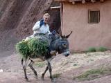 Mann auf einem Esel