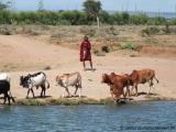 Massai mit Herde