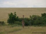 Grenzgaenger (auf der Grenze Kenia/ Tansania)