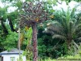 Friedensbaum auf der Insel Providence
