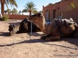 In die Sahara