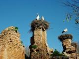 Chellah - Ruine mit Storchennest