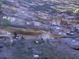 Ziegen in den Steinen