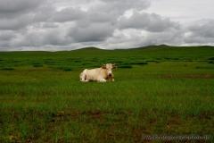 Mongolei 2013