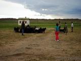 Die Ziegen werden zusammengetrieben
