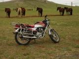 Pferde und Motorrad