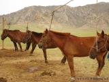 Pferde im sogenannten Stall