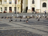 Vogelbad auf dem Platz