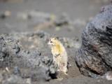 114-Kamtschatkas-Tierwelt
