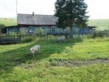 133-Im-Altai
