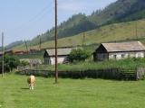 145-Im-Altai