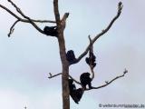 Schimpansen im Tacugama-Schimpansenprojekt
