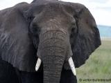 Elefant -  auf Augenhoehe