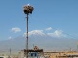 Storchennest und Ararat