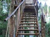 13 - Baumhaus im Kibale Forest