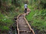 15 - Sumpfgebiet im Kibale Forest