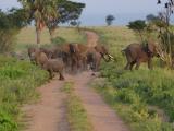 28 - Murchison Falls NP