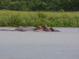 35 - Murchison Falls NP